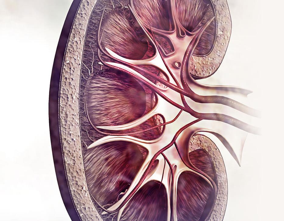 Nephrology/Urology 2